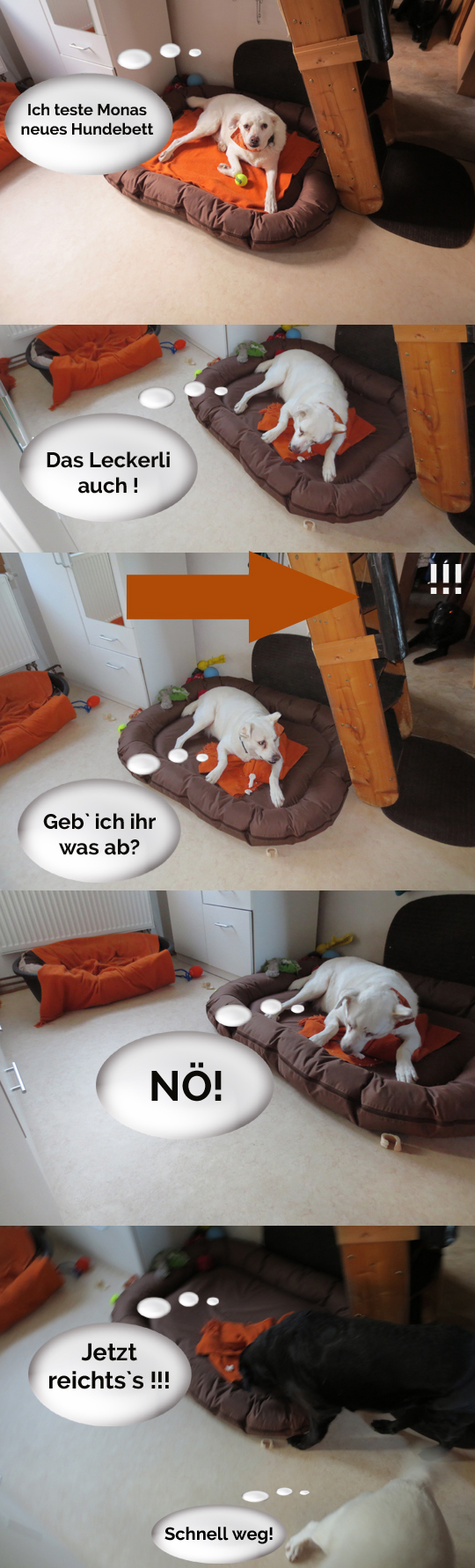 Hundebett Test