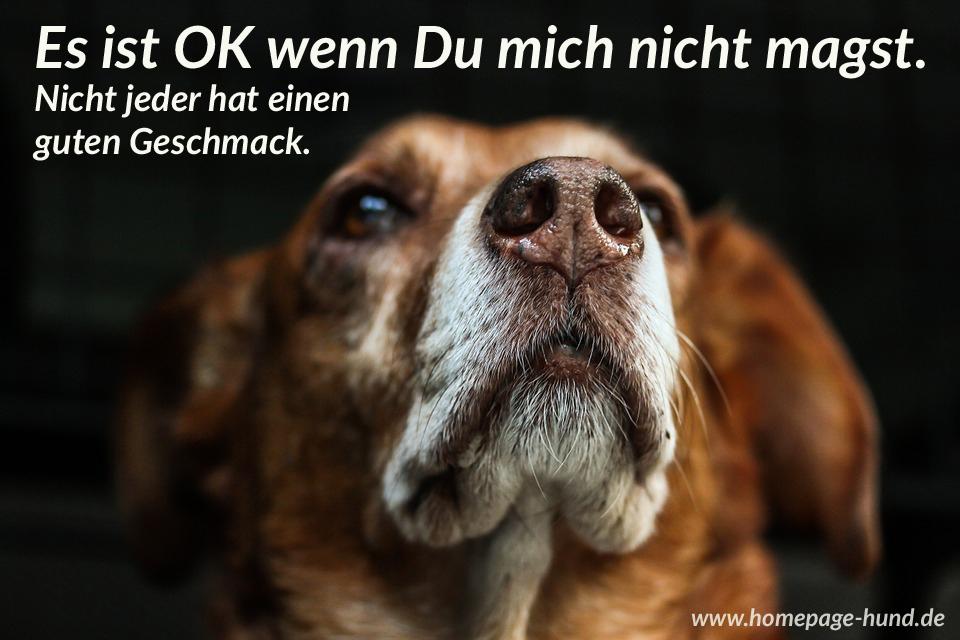 Homepage Hund - Hundebilder mit Sprüchen - Hundesprüche