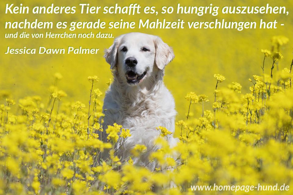 Homepage Hund Hundebilder Mit Sprchen Hundesprche