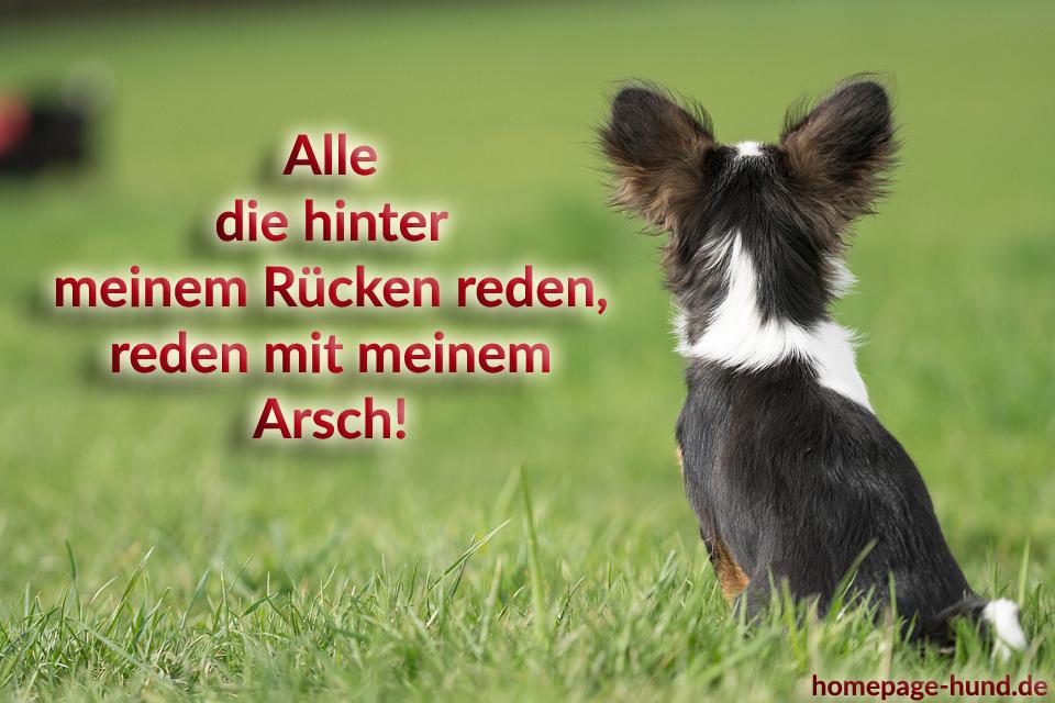 Homepage Hund Hundebilder Mit Spruchen Hundespruche
