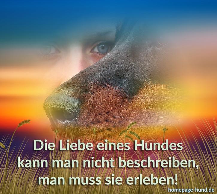 Foto Mit Hundespruechen