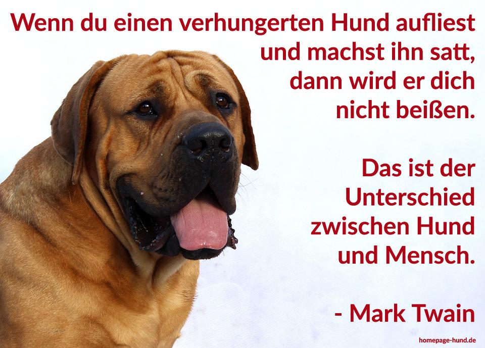Homepage Hund Hundebilder Mit Sprüchen Hundesprüche