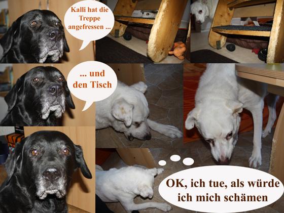 Hund testet Möbel