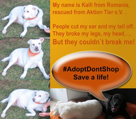Adopt don`t shop
