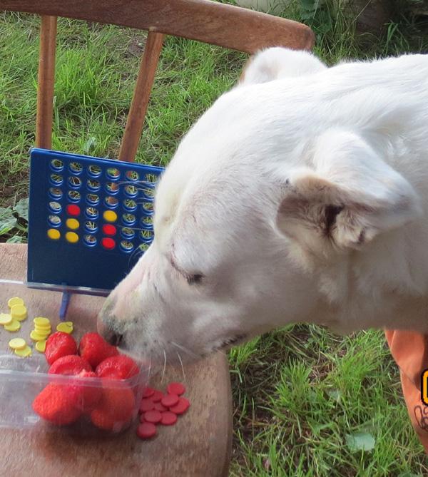 Kalli und die Erdbeeren
