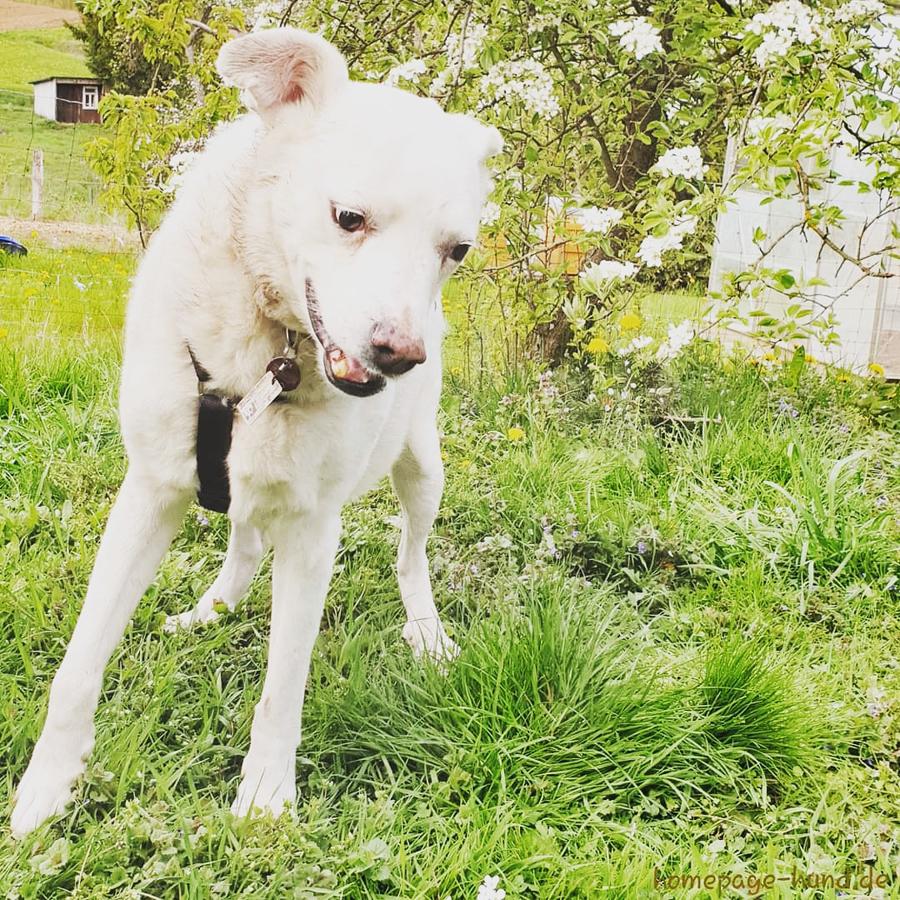 Hund_Kalli_Garten