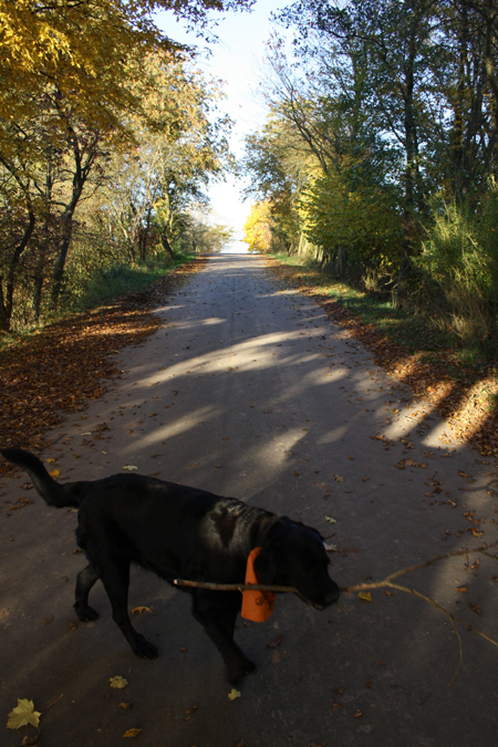 Mona bei ihrem Spaziergang im Herbst