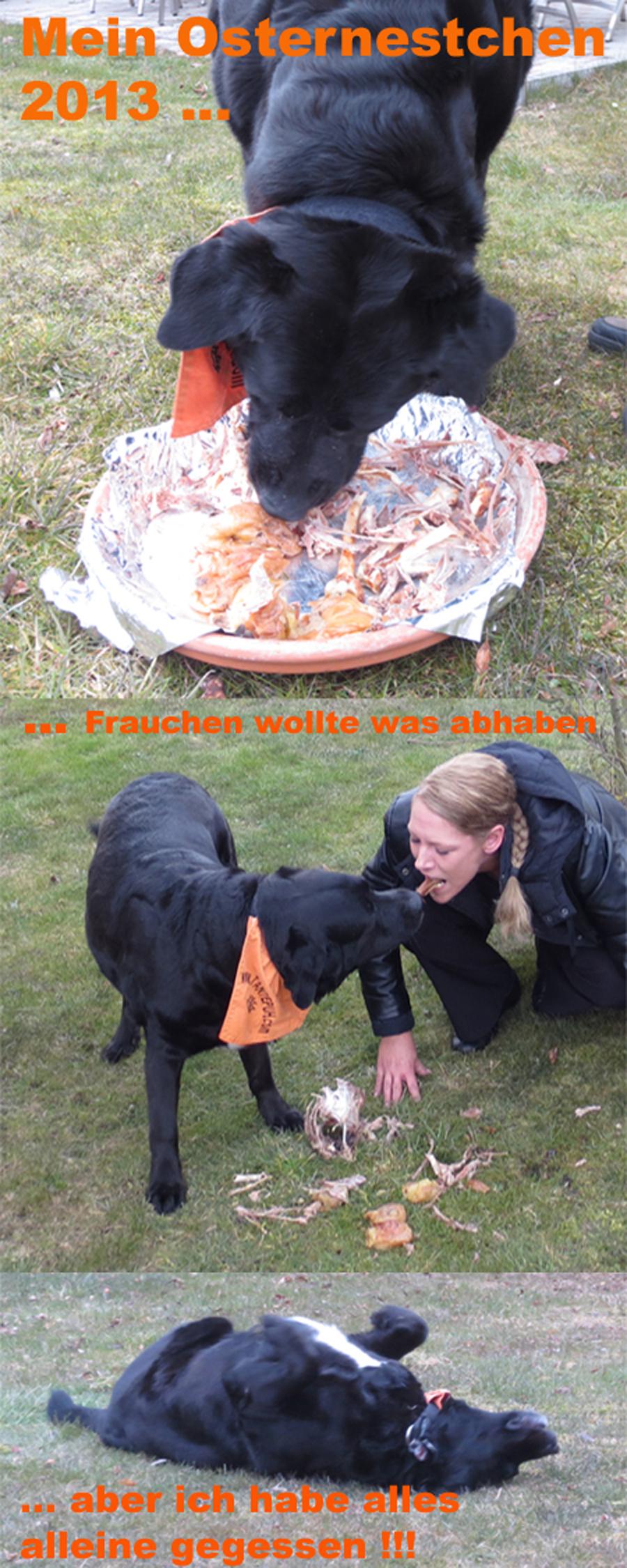 Osternest für Hunde - Hund an Ostern