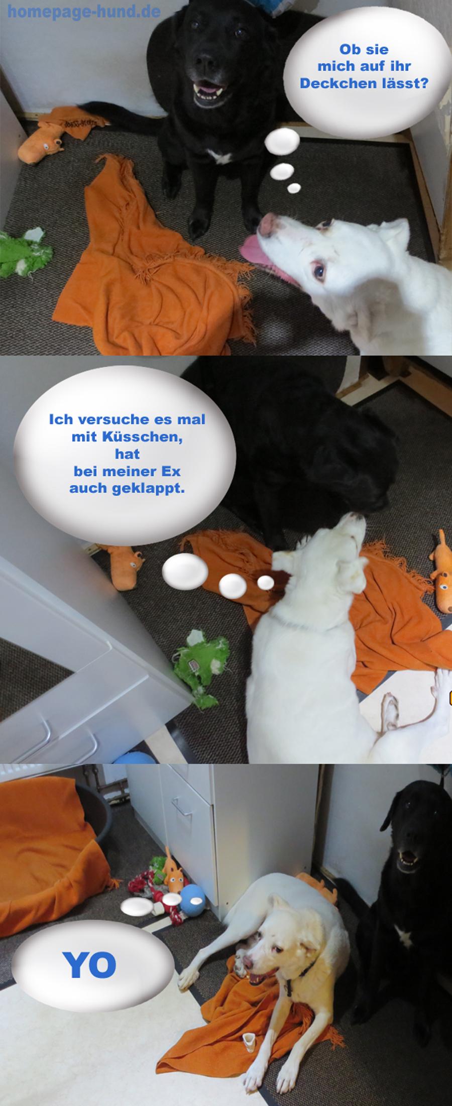 Comic Hund Koerbchen - Rüden Tipps von Kalli