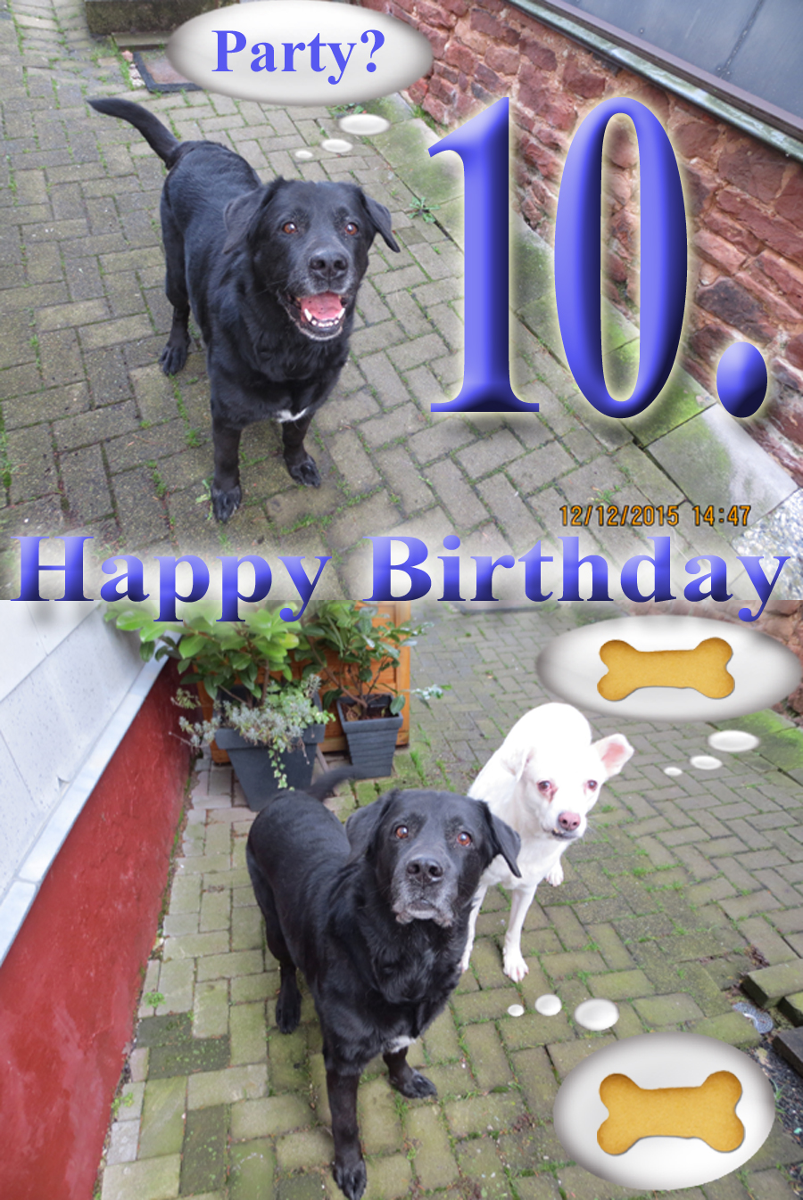 Hundegeburtstag 10