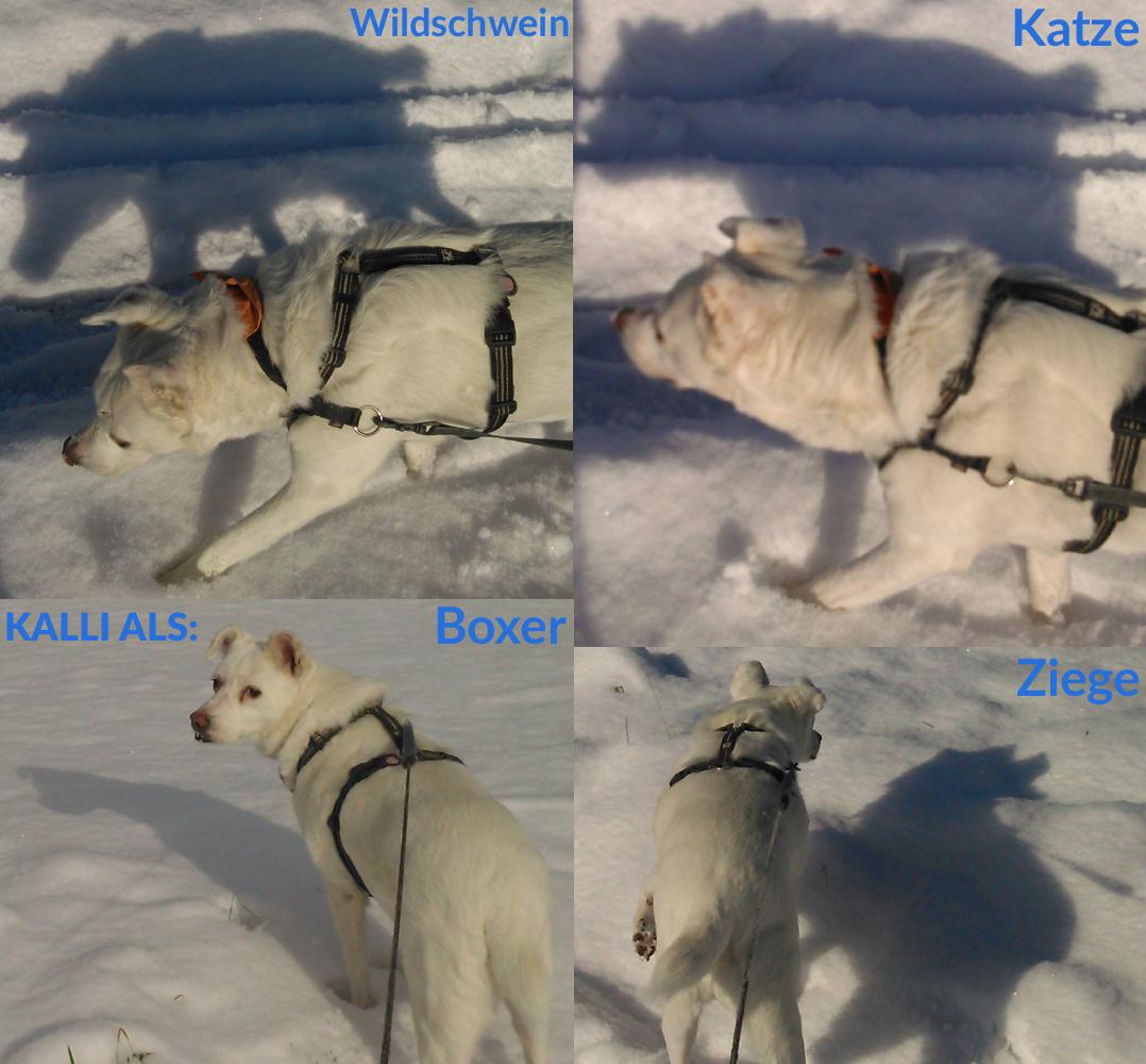 Hunde Schattenspiele
