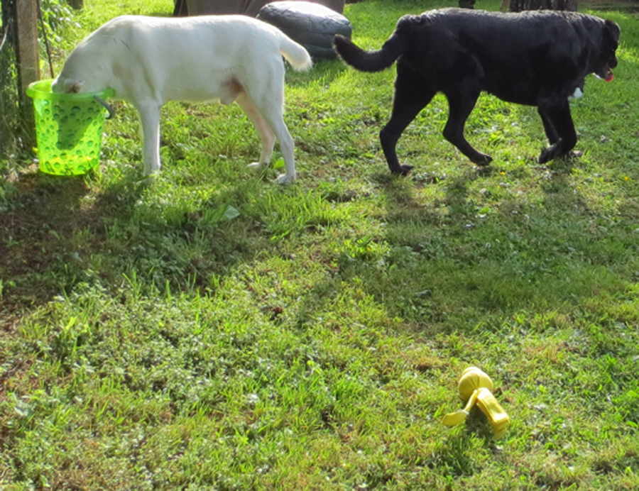Hunde Wasser