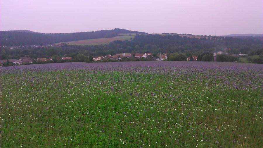 Wohra im Wohratal Hessen