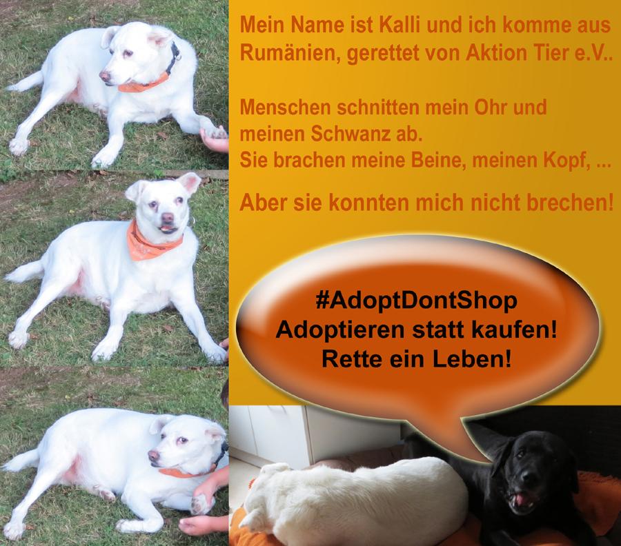 Tierschutz deutsch