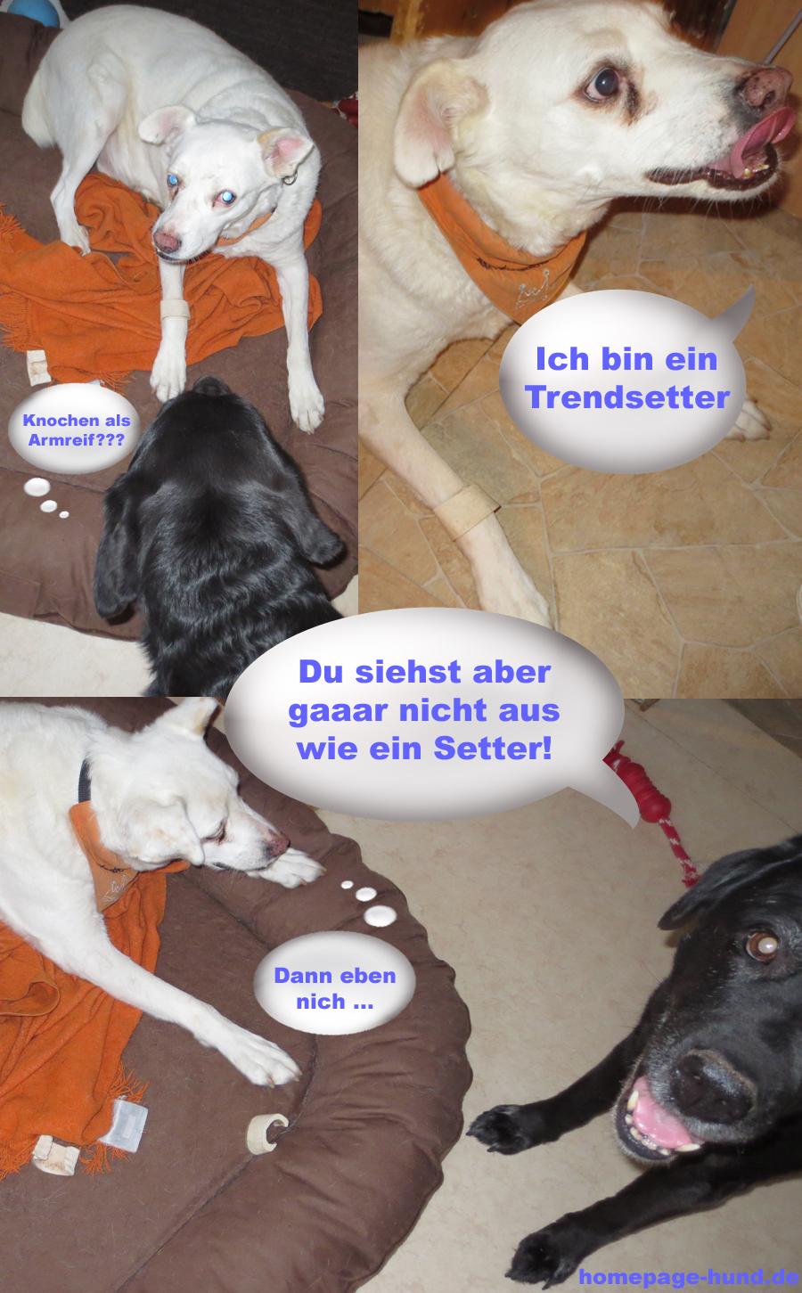 Hunde Armreif - Hund als Trendsetter