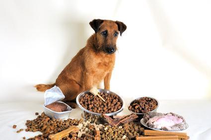 Hundefutter Tiernahrung Futterherstellung von Trockenfutter