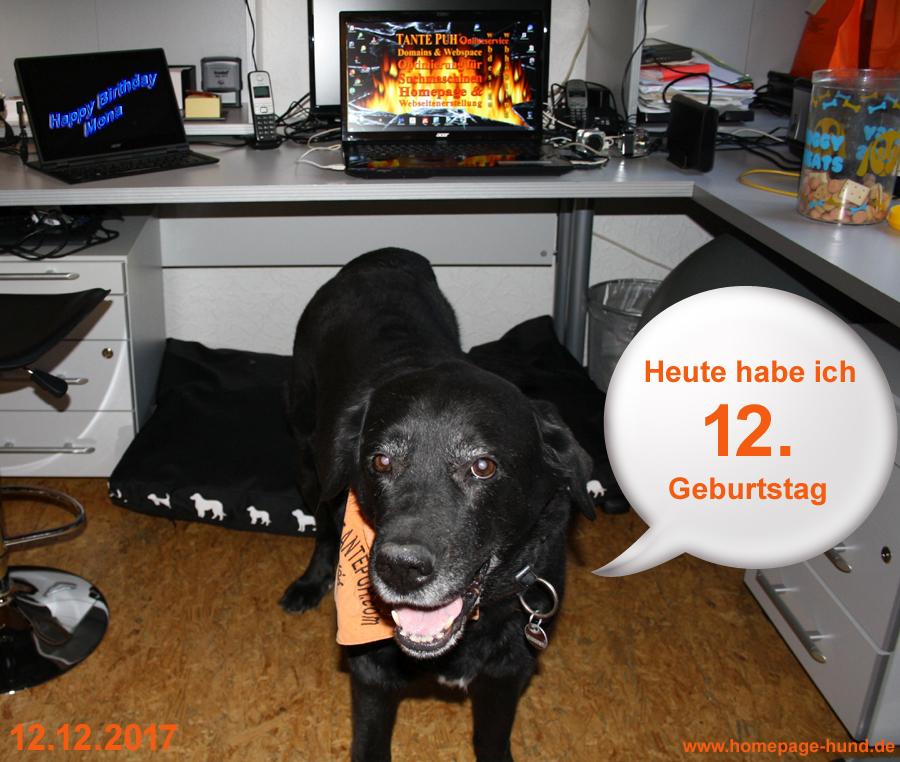 Hundegeburtstag Moan wird 12