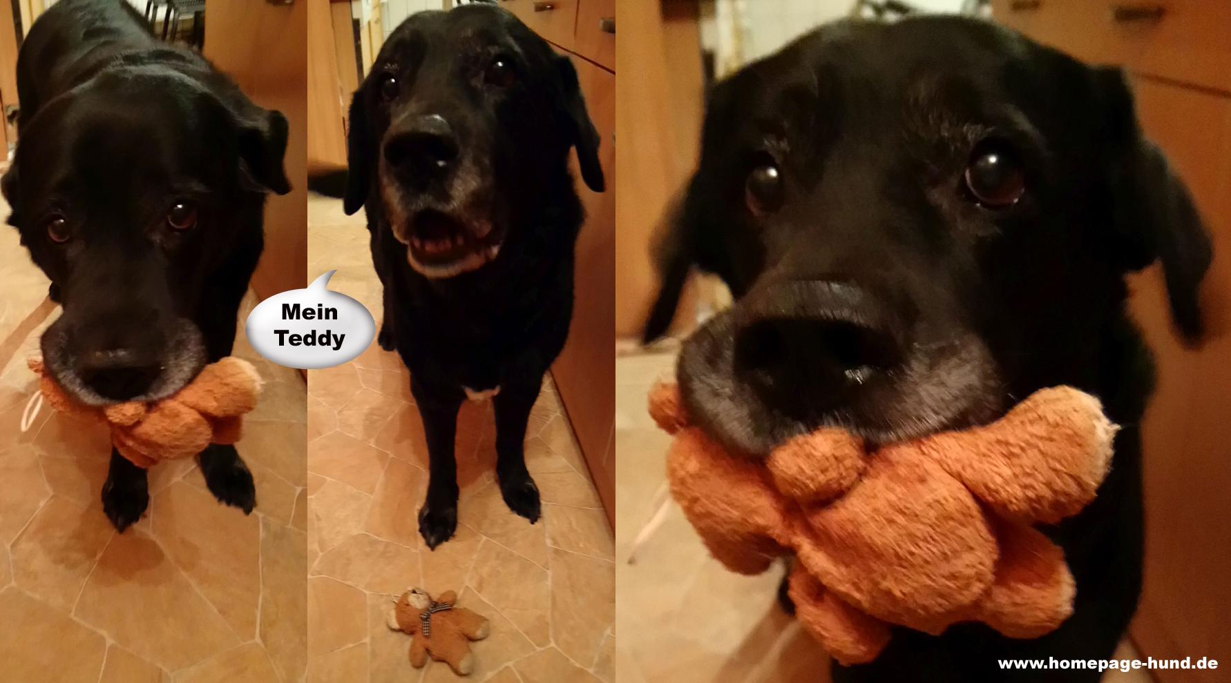 Hund Teddy