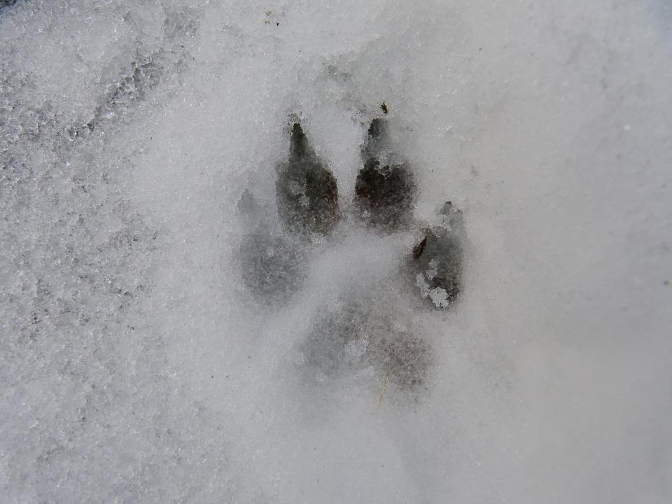 Pfote Schnee Hund