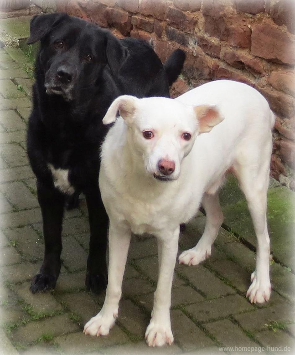Mona Hund und Kalli Krawalli