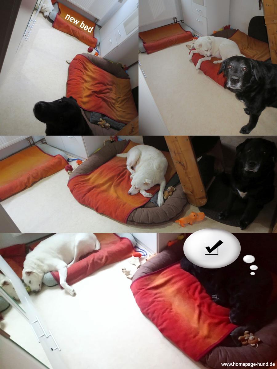 new bed - Das neue Hundebett