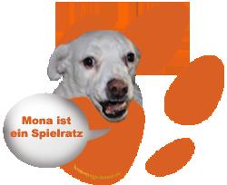 Mona ist ein Spielratz