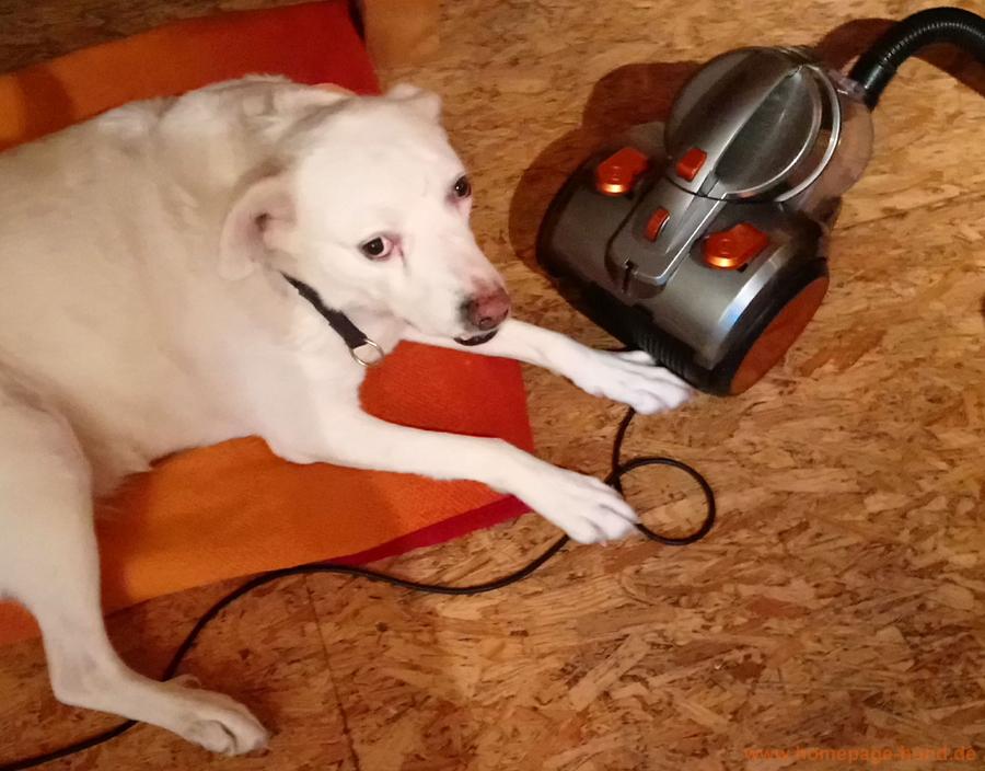 Staubsauger Hund Coole Socke