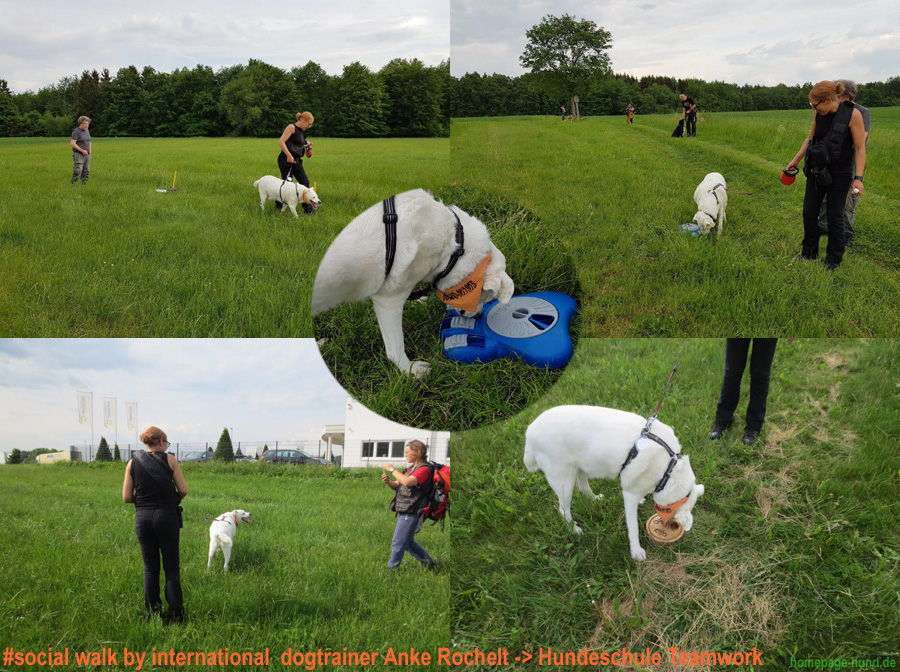 Social Walk Training in der Hundeschule