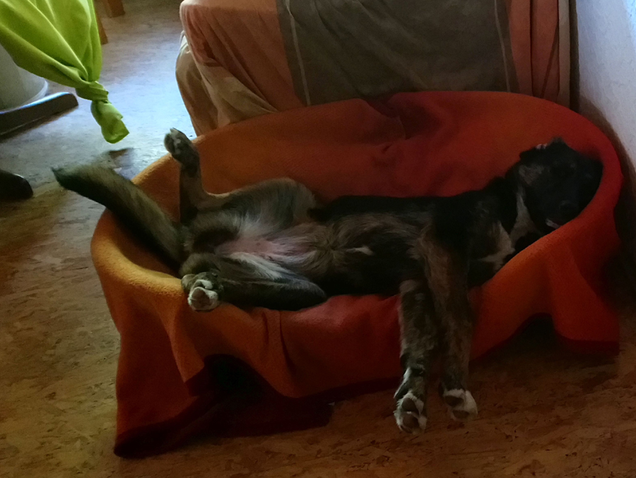 Dorchen im Hundekorb