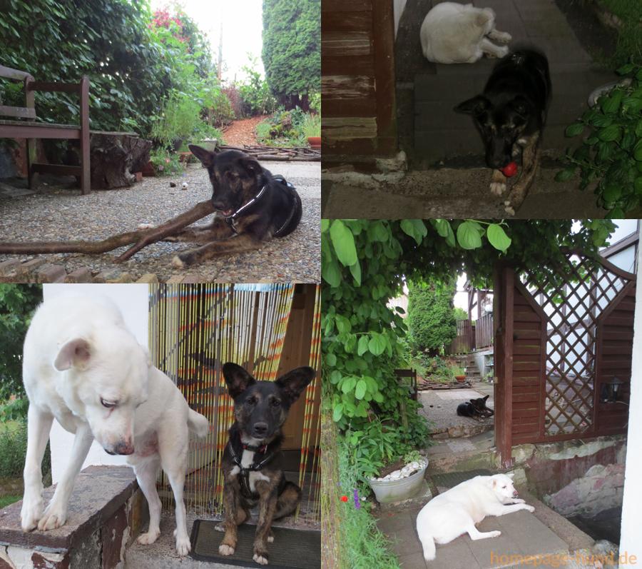 Hunde Spiel am Haus