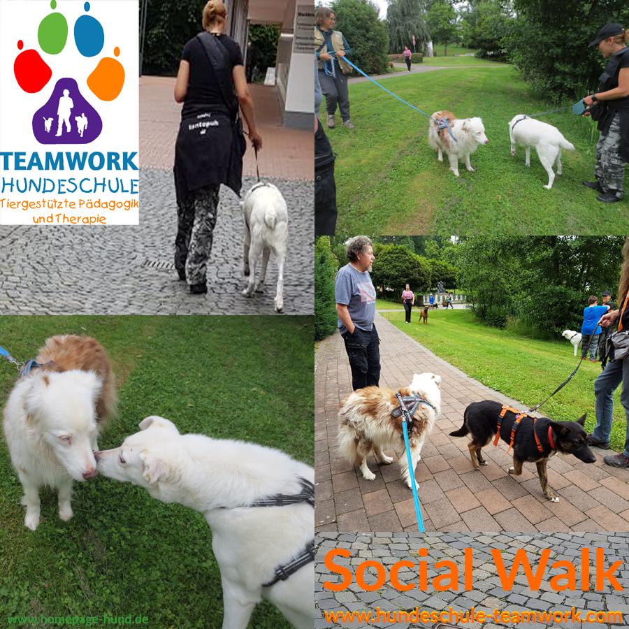 Social Walk Hundeschule Hunde Training