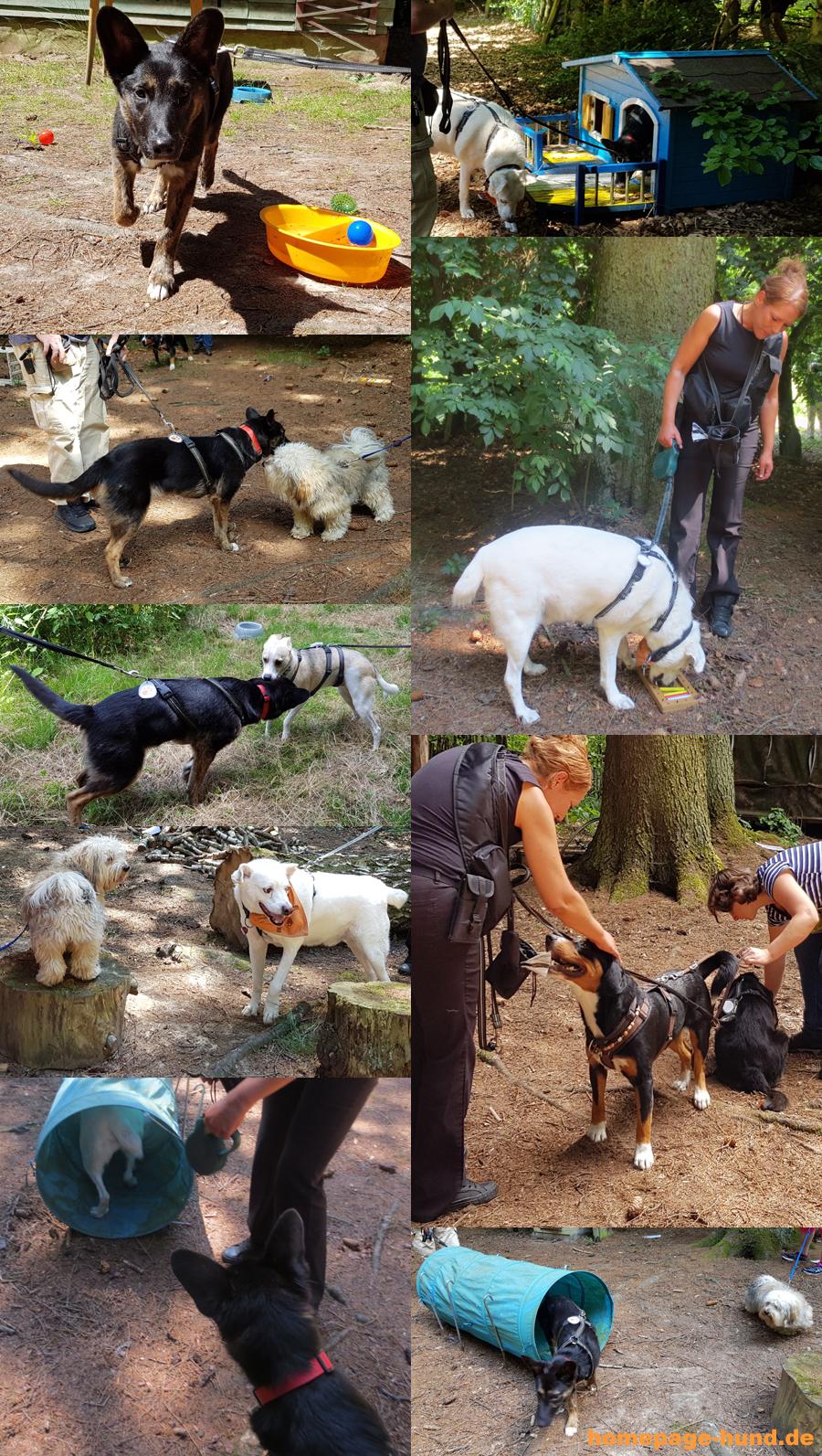 Social Walk Hundeschule Teamwork