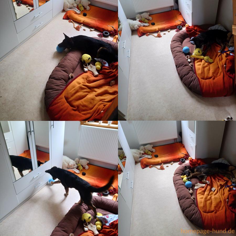 Spiele im Hundekorb