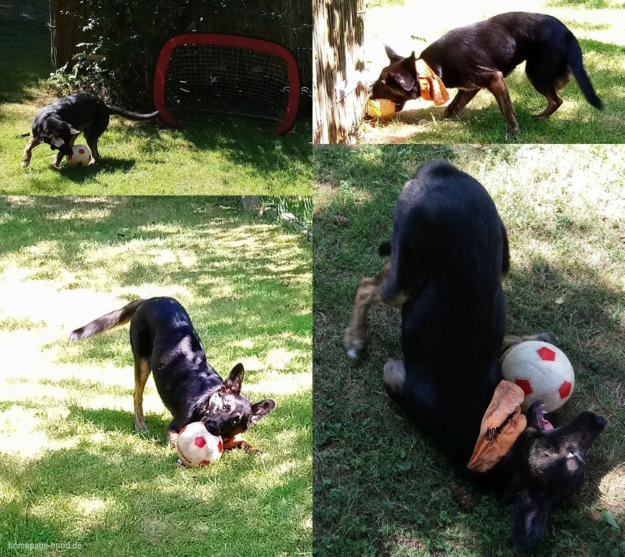 Fussball-Hund