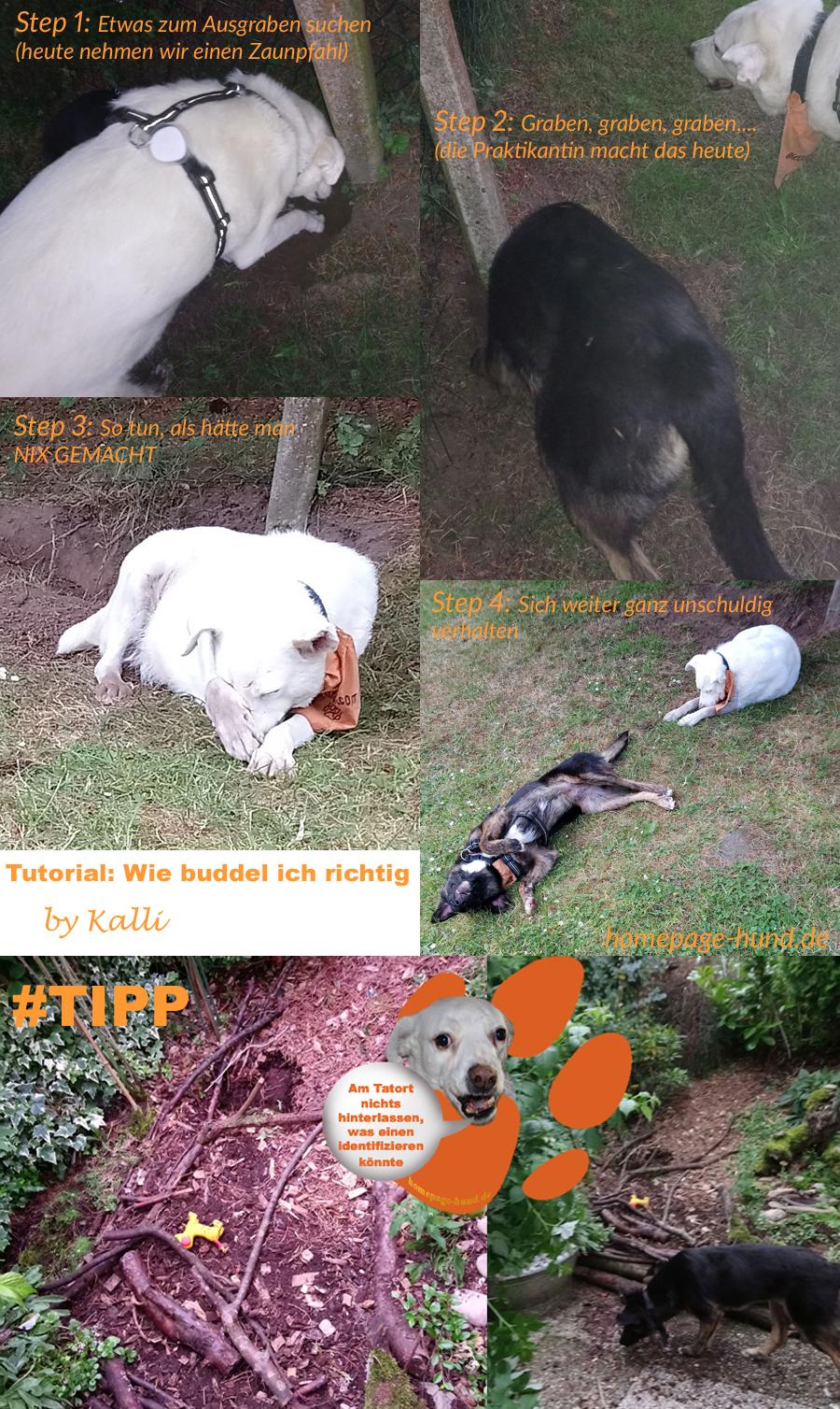 Hundeblog Tutorial