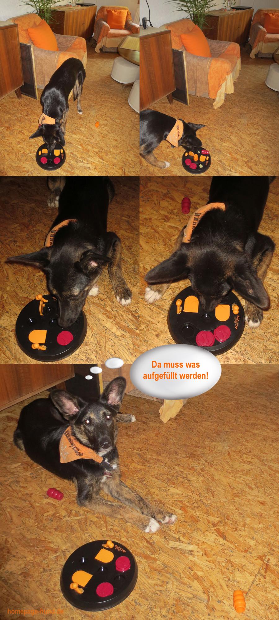 Hundespiel Spiel Hunde