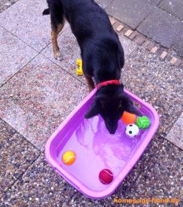 Wasserspiele Hund