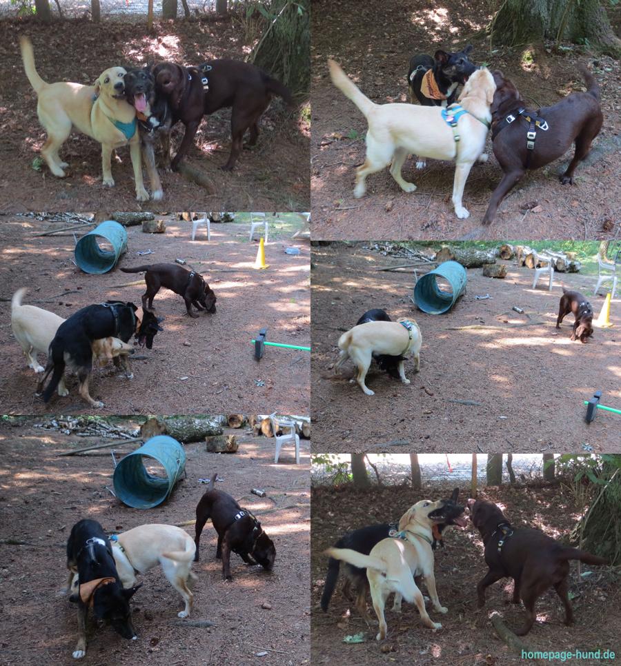 Freilauf Hundeschule