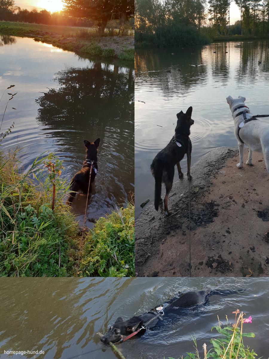 Hundeschwimmen - Schwimmen in der Wohra