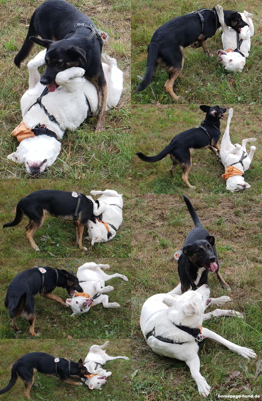Hundefitness