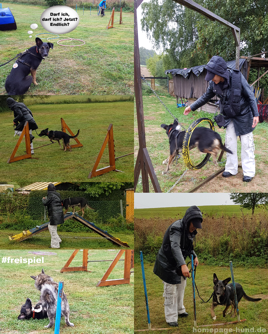 Hundeschule Parcours Hunde Training Hessen