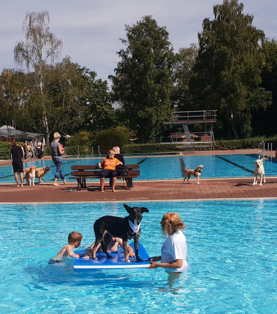 Hundeschwimmen Neustadt