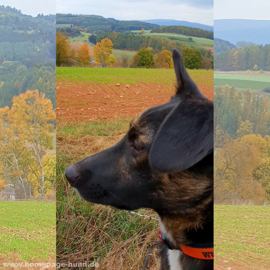 Hund im Herbst Herbstspaziergang