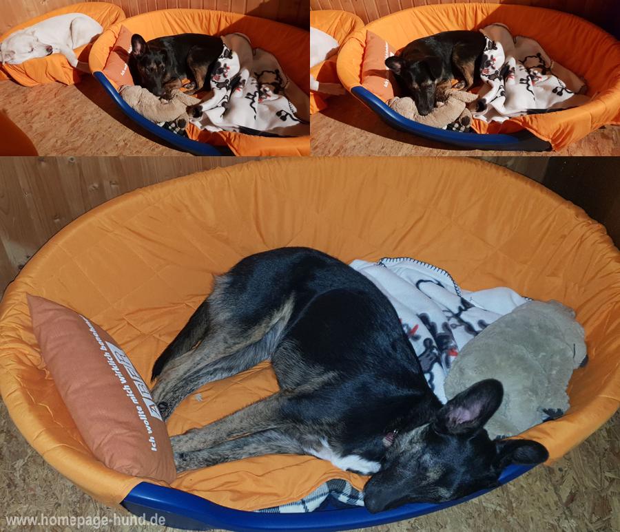 Hundebett Hundekorb gross XXL