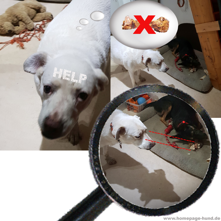 Knochenklau Hund