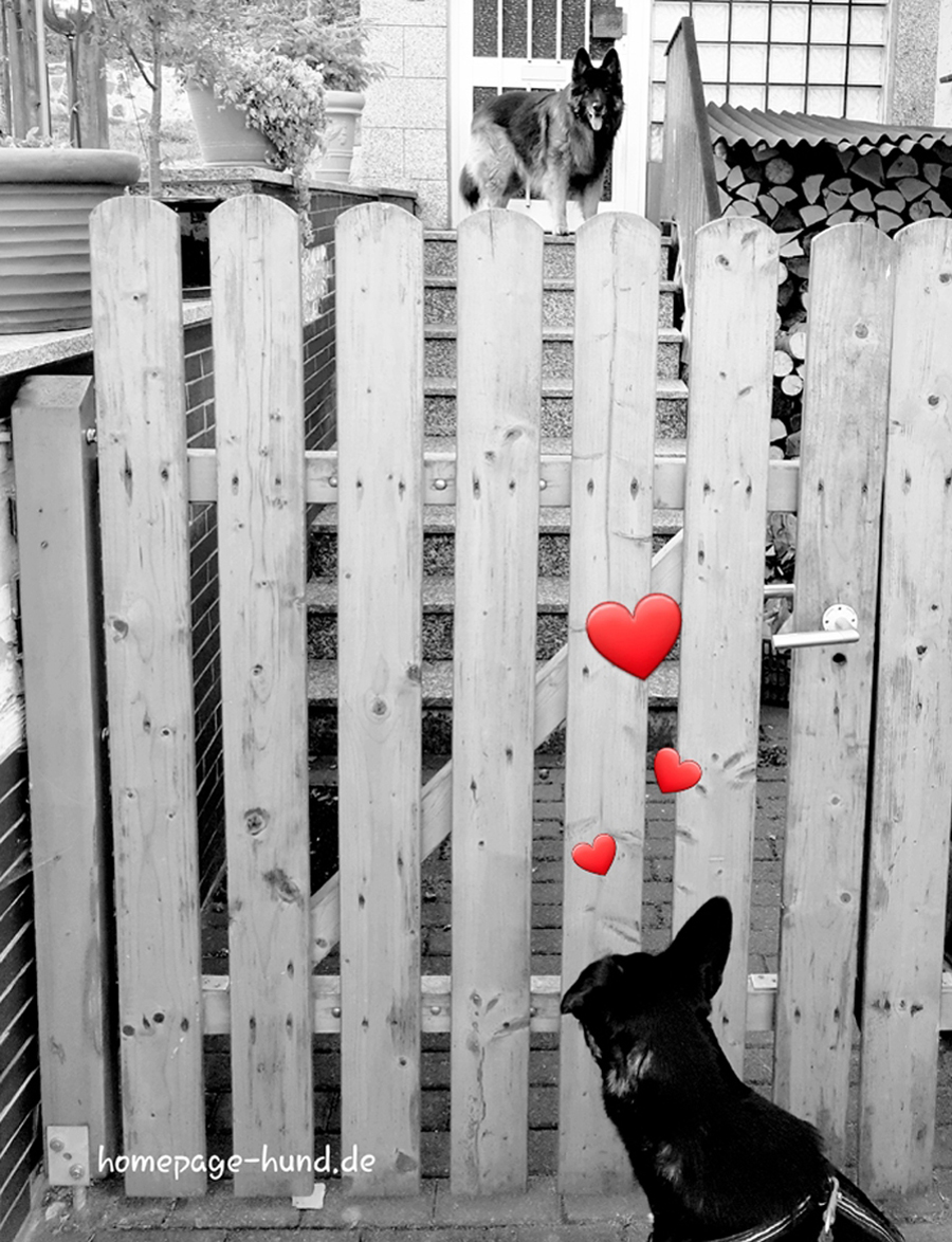 Verliebter Hund