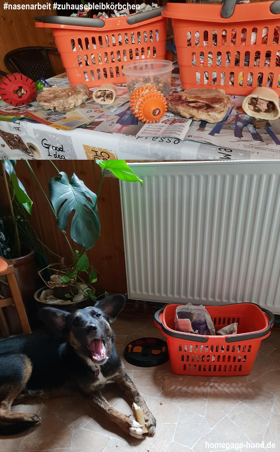 Zuhausebleibkoerbchen Nasenarbeit Hunde
