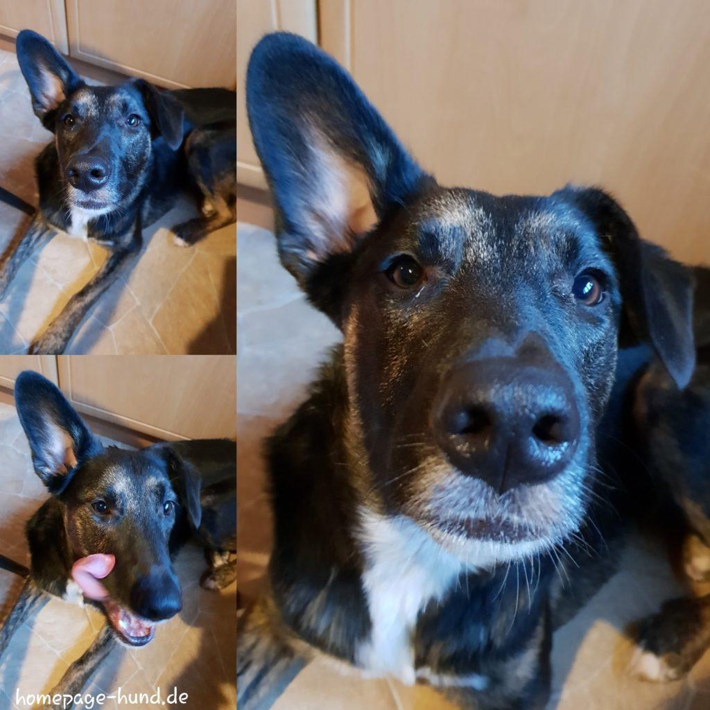 Die immer Hunger hat - hund Hundeblog - lustiger Blog für Mensch und Hund