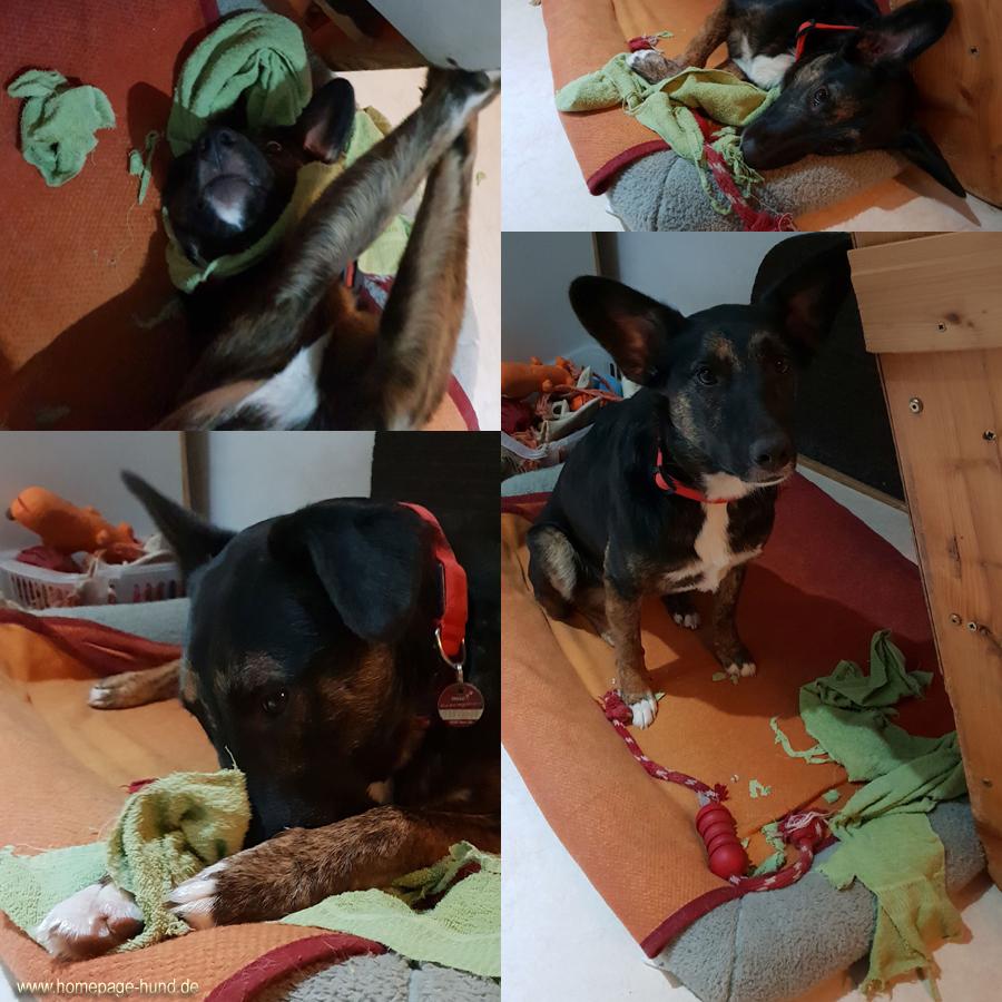 Dorchen hilft beim Wäsche machen