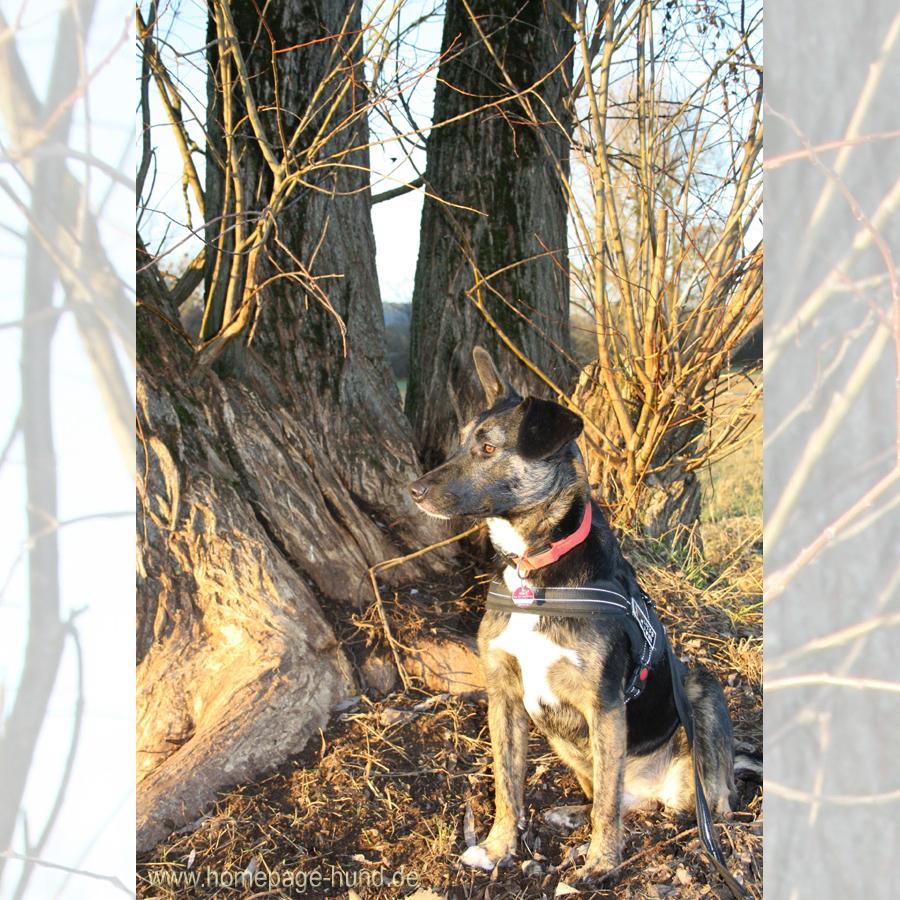 Hund Baum Blog
